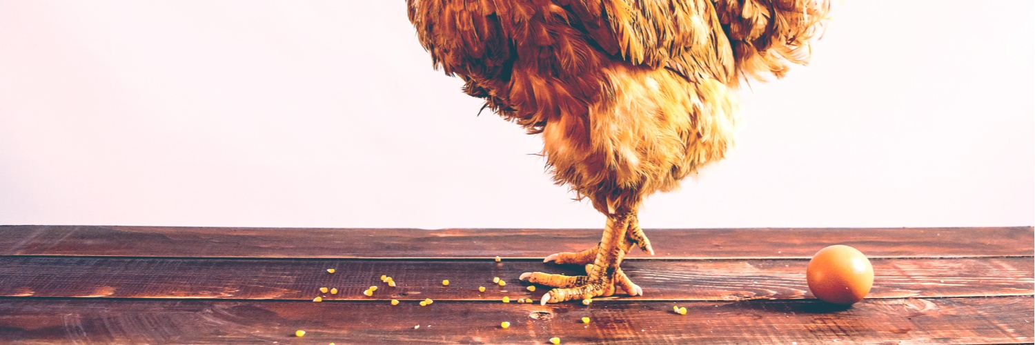 blog-Root-Cause-Analysis-and-the-Chicken-and-Egg-Causality-Dilemma.jpg
