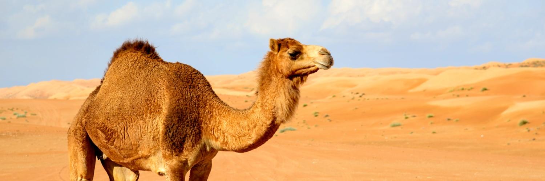 root-cause-logic-camel.jpg