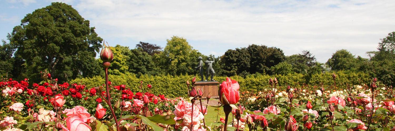 piper-alpha-rose-garden_1500x500.jpg